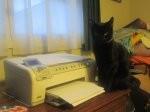 drukarka na biurku